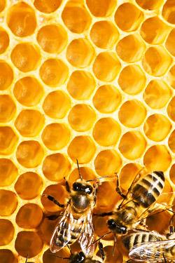 Du th or me du nid d abeille la conjecture de kelvin for Carrelage nid d abeille