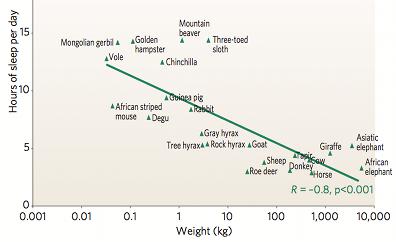 sommeil et poids herbivores 400