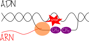 methyl_transcription
