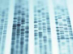 test ADN