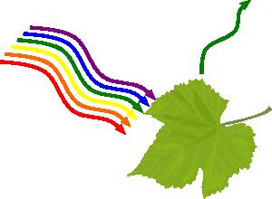 absorption chlorophylle