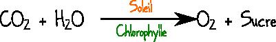 photosynthèse réaction chimique