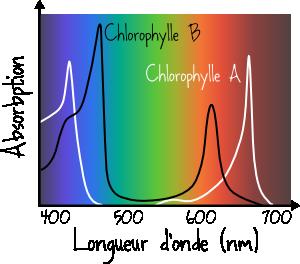 spectre absorption chlorophylle
