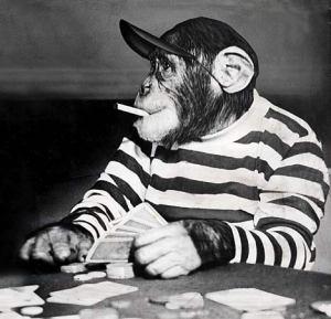 chimpanzee joueur