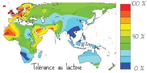 carte tolérance lactose