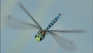 Comment les insectes font-ils pour voler ?